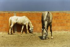 Free Skinny Horses Royalty Free Stock Image - 1588886