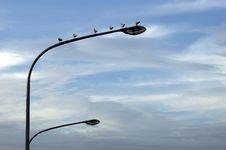 Free Seagulls On Street Lantern Stock Photography - 1588902