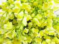 Free Bouquet Of Field Yellow Flowers Royalty Free Stock Image - 15806346