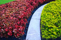 Free Contrast Plants Royalty Free Stock Photo - 15806485