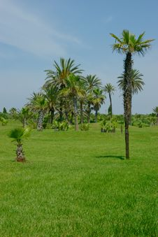 Free A Few Palms On The Grass-plot Royalty Free Stock Image - 15801716
