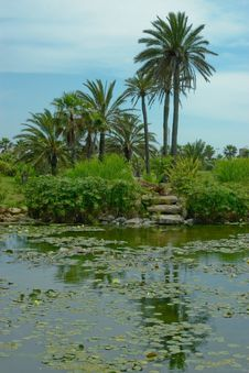 Summer Landscape. Palm Trees On The Lakeside. Royalty Free Stock Photos