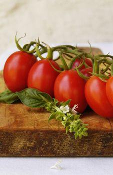 Free Tomatoes Stock Images - 15802204