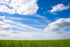 Free Field Of Green Grass On A Background Stock Photography - 15802542