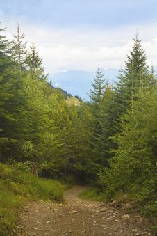 Free Mountain Path Royalty Free Stock Photos - 15802968