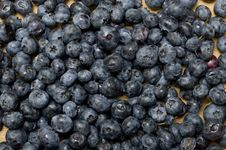 Free Blueberries Stock Images - 15804744