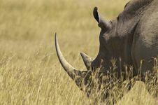 Free White Rhino Royalty Free Stock Photo - 15805435