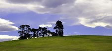 Free Pine Trees On A Green Hill Stock Photos - 15806283