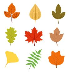 Free Autumn Leaves Set Royalty Free Stock Photo - 15806845
