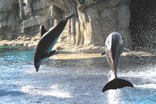 Free Two Acrobats Stock Photo - 15807790