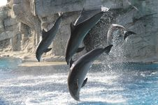 Acrobats Dolphins Stock Image