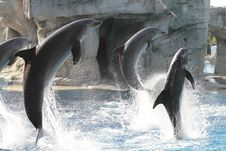 Free Acrobats Dolphins Stock Photography - 15807852