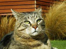 Free Queenstown Cat Stock Images - 15808584