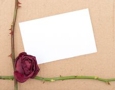 Dry Rose With Card Stock Photos