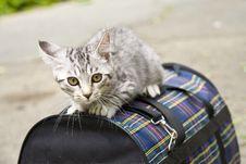 Free Kitten Stock Photography - 15809322