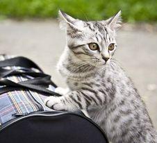 Free Kitten Stock Images - 15809324