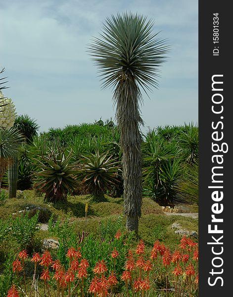 Cactus in the foreground. Different cactus.