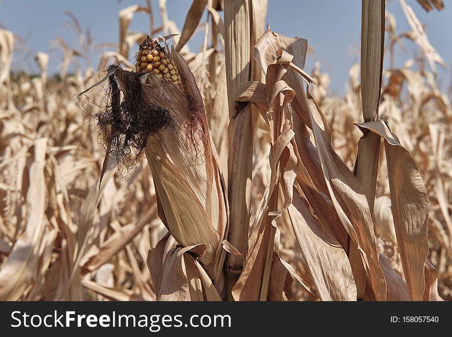 Agriculture in autumn