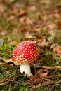 Free Muscaria In Fall With Leaves And Grass Stock Photography - 15810522