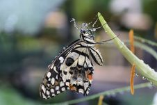 Free Tropical Butterfly Stock Photography - 15811192