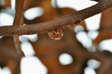 Free Cicada Of Autumn Stock Photo - 15811210
