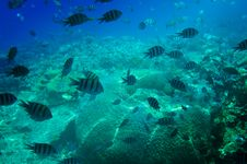 Free Underwater Landscape Of Red Sea. Royalty Free Stock Images - 15811439