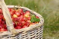 Free Basket Full Of Cherries Royalty Free Stock Photos - 15812828