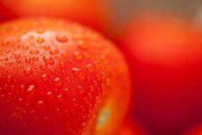Free Fresh, Vibrant Roma Tomatoes Royalty Free Stock Photo - 15813975