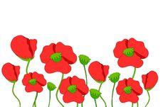 Free Poppies Royalty Free Stock Photo - 15816295