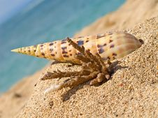 Free Close Up Of Beach Royalty Free Stock Photos - 15816698
