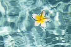 Free Tropical Frangipani Flower In Water Stock Photography - 15816762