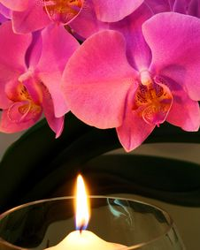 Free Orchid By Candle Light Royalty Free Stock Photos - 15818018