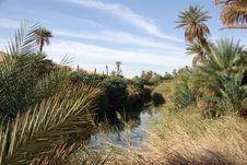 Palm Grove, Libya
