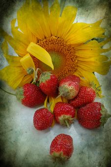 Free Strawberry And Sunflowerraspberry Stock Photos - 15819083