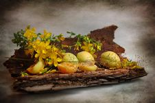 Free Apricots And Bark Of Pine-tree Royalty Free Stock Photography - 15819107