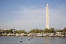 Free Washington Monument Cherry Blossom Right Royalty Free Stock Photography - 15819217