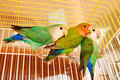 Free Colorful Parrots Royalty Free Stock Photos - 15823868
