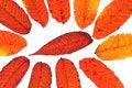 Free Autumn Leaves Stock Photo - 15824730