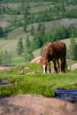 Free Grazing Horse Stock Photography - 15825402