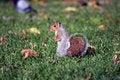 Free Squirrel Stock Photo - 15826500