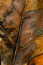 Free Close Up Of Autumn Leaves Royalty Free Stock Photo - 15827295