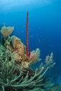 Free Erect Rope Sponge Royalty Free Stock Photography - 15827357