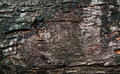 Free Bark Texture Stock Photo - 15829710