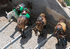 Free Donkeys At Fira, Santorini Stock Photography - 15821362
