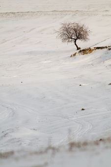 Single Tree In Snow Royalty Free Stock Photos