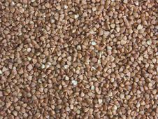 Free Buckwheat Seeds Royalty Free Stock Images - 15822539