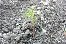 Free Sprout On Asphalt Royalty Free Stock Photo - 15822805