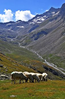 Free Sheep In The Mountains Royalty Free Stock Photography - 15823927