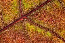 Free Autumn Leaf Stock Photo - 15824400