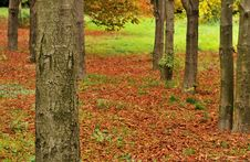 Free Autumn Stock Images - 15824664